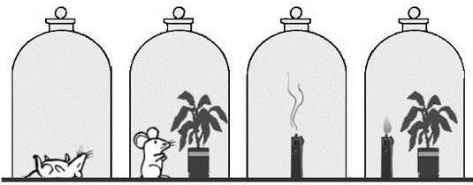 或动物排出的二氧化碳是绿色植物进行光合作用的原料