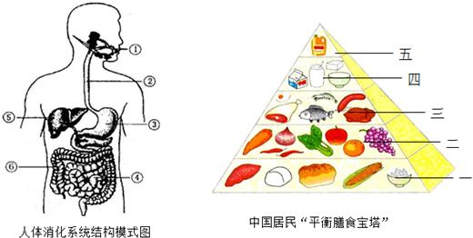 根据膳食宝塔的提示,小彬同学的这份食谱明显缺少第