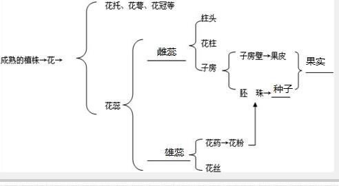 (2005南平)请你用图示法表示花的结构及其与果实形成的关系