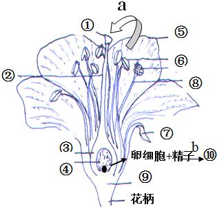 如图是桃花结构图,请据图回答