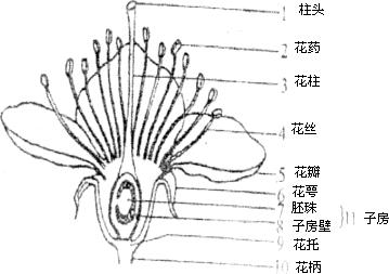 观察如图桃花的结构,回答有关问题