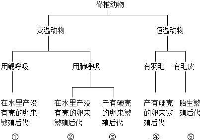 表中②和④代表的动物类群分别是(  )