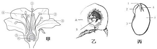 根尖分生区细胞手绘图