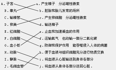 请将下列结构和它相对应的功能用线连接起来A