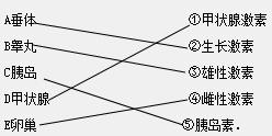 你将下列内分泌腺与其分泌的激素用直线连接起