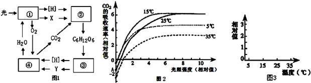【解答】解:(1)光合作用的光反应中产生ATP和[H]供暗反应利用,有氧呼吸第一阶段是产生丙酮酸和[H]. (2)光强度大于8时,25与15条件下有机物的积累速率相同,但25的呼吸作用大于15条件下的呼吸速率,因此25时有机物的合成速率大于15条件有机物的合成速率. (3)在35条件下如果白天光照强度较长时期为1时,植物的光合作用等于呼吸作用,植物不会有有机物的积累,故长期处在该情况下植物不可能生长. (4)图中的纵坐标上的数值代表每个温度下的呼吸作用强度,按照图中数据作图即可. 故答案为: (1)ATP