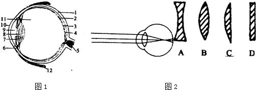 如图1是眼球的结构示意图.据图回答