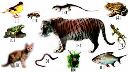 给下面动物分类(填标号)