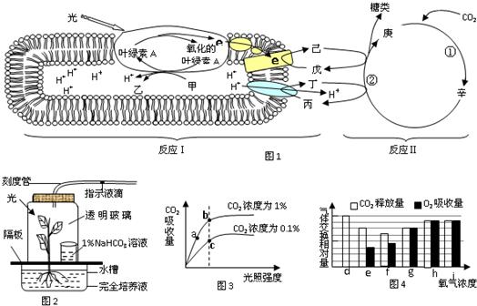 如图1为植物光合作用过程的模式图
