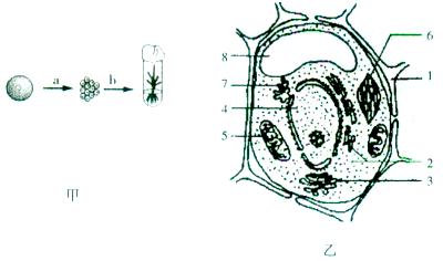 图乙表示幼苗根细胞结构示意图,请据图回答