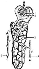肾单位是形成尿的结构功能单位,如图是肾单位的结构示意图,请据图回答图片
