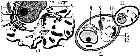 原核细胞和真核细胞的形态和结构的异同 7/87 - 试题