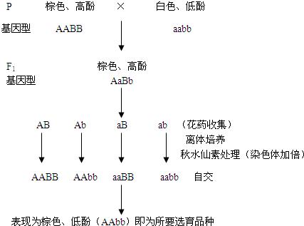如图所示,小组棉花用{}_{}^Co照射科研种子浦东高中香山图片