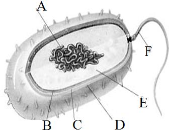 图为细菌结构的示意图