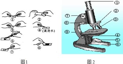如图1是洋葱鳞片叶表皮细胞临时装片的制作方法步骤
