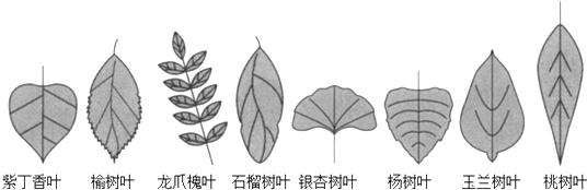 找一找哪些树叶是对称图形,圈出来.
