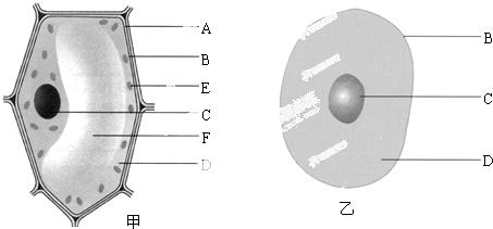 如图是植物细胞和动物细胞的结构示意图,据图回答问题
