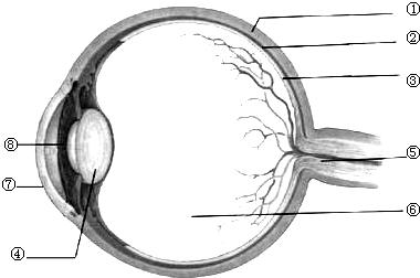 如图为眼球的基本结构示意图,据图完成下列各题.