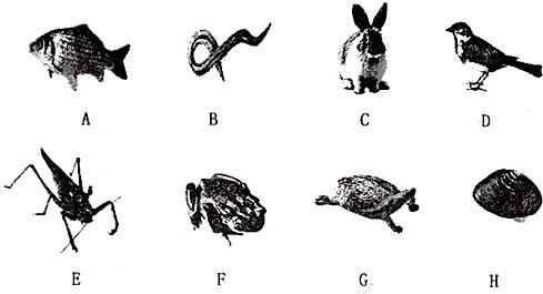 (4)图中 f f属于两栖动物, g g属于爬行动物.