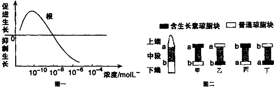 mol/L的情况下,对根生长起促进作用;高于该浓度时对根生长起抑制作用,这体现了生长素生理作用的两重性.在设置此实验的对照组时,可利用蒸馏水(完全培养液)来培养的幼苗. 图二所示实验的结果是,只有甲、丁组的普通琼脂块能使去掉尖端的胚芽鞘继续生长,说明生长素只能从图中的a侧向b侧运输并促进胚芽鞘的生长,而不能从b侧向a侧运输,即生长素只能从植物的形态学上端运输到形态学下端,而不能倒转过来运输. (2)在设计验证紫外光抑制植物生长与生长素的氧化有关的实验时,应遵循单一变量和对照性原则,即给予甲组适宜的可见光光