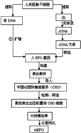 (4)本流程图中还涉及到的一项细胞工程技术是