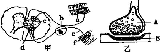 高等动物细胞结构图手绘图
