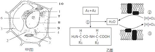 甲图为某植物细胞的亚显微结构模式图,乙图表示与水有