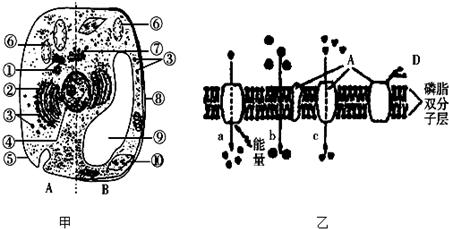 植物细胞亚显微结构及细胞部分结构示意图