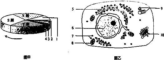 如图甲为细胞周期的模式图,图乙为动物细胞的亚显微结构模式图.