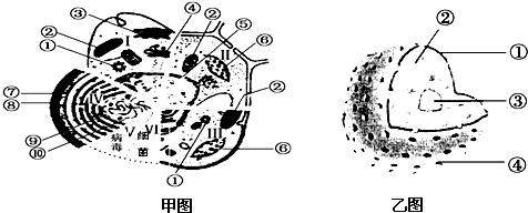 初中细胞结构图手绘