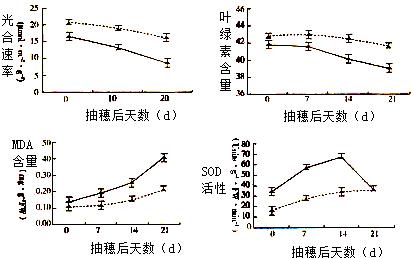 某研究小组欲v叶片a叶片对叶片结实期间高中光合水稻本溪跳楼图片