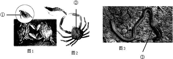 写出图1,图2,图3,三种动物及结构名称