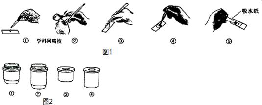 (3)将显微镜的正确使用步骤补充完整:取镜安放→ 对光 对光→放置