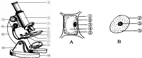 (2014云南模拟)如图分别为细胞结构和显微镜结构示意图,据图回答下列