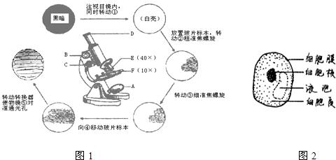 图1表示显微镜的结构,观察和绘图的过程.请据图回答