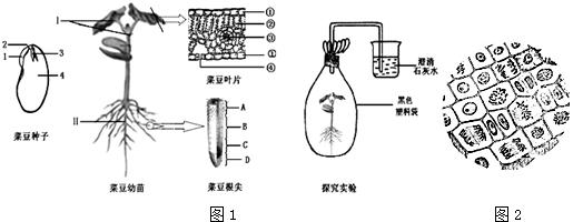 从组成多细胞植物体的结构层次上