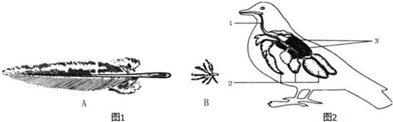家鸽适于飞行生活的形态结构和生理特点主要表现在