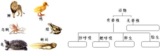 请将如图动物按图中分类填入方框内. 解析 收藏 组卷 下载 离线 39.