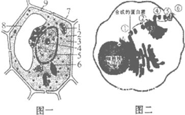 图一表示植物细胞亚显微结构模式图,图二表示动物细胞某种生理活动