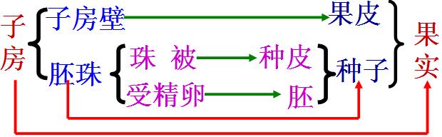 (1)花的结构包括:花柄,花托,花萼,花冠,雄蕊和雌蕊.