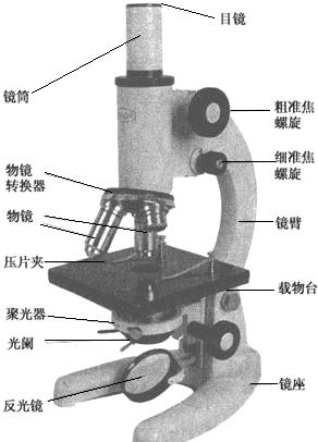 通过分析中显微镜的结构图看出:物镜安装在