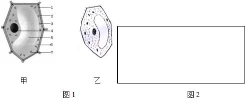 如图1是植物细胞的基本结构模式图