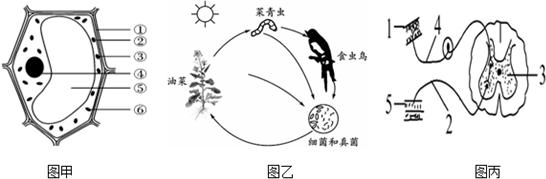 如图为细菌的结构示意图