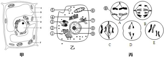 如图甲为某植物细胞亚显微结构模式图,图乙是某高等动物细胞亚显微