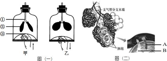 用显微镜观察小鱼尾鳍内血液流动时