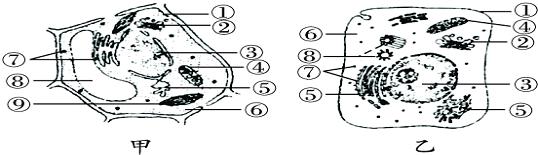 如图甲,乙分别是两类高等生物细胞的亚显微结构模式图,请据图回答下列