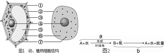 如图1表示绿色植物叶肉细胞部分结构中的某些生命活动
