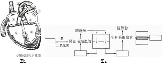 如图是鸽卵的结构图,据图回答:(1)写出标号所指结构名称:②______④