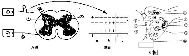 (2)b图表示神经纤维受到刺激的瞬间膜内外电荷的分布情况,在a,b,c中