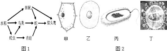 (3)如图2四个图中,能代表水稻结构的基本单位是图 甲 甲.